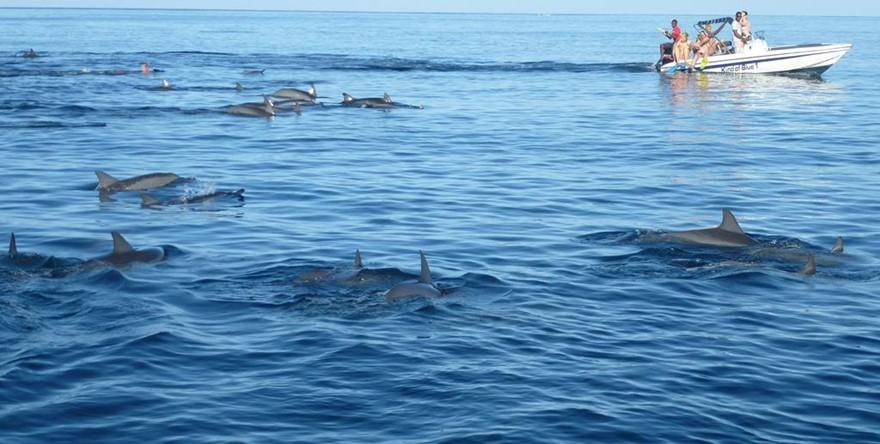 Nager avec les dauphins avec explorer for Nager avec les dauphins nice