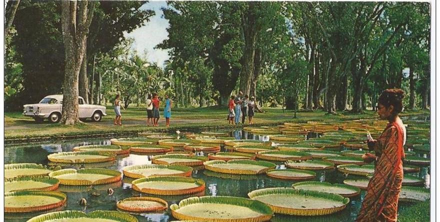Ndj 12 11 13 jardin pamplemousse lieu incontournable l for Jardin pamplemousse