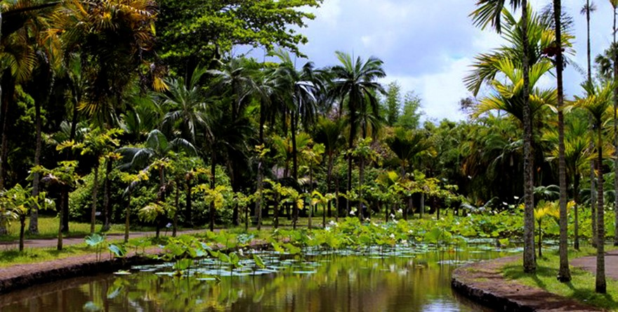 Discover the Botanical Garden at Pamplemousse
